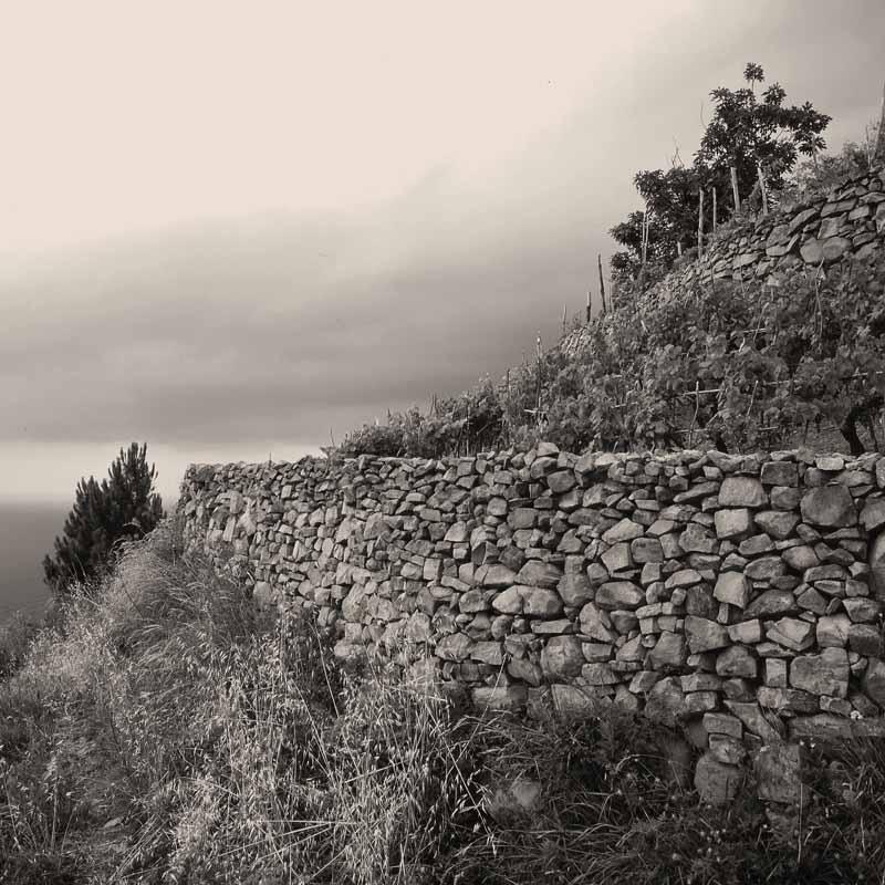 Dry Stone Wall, Cinque Terre